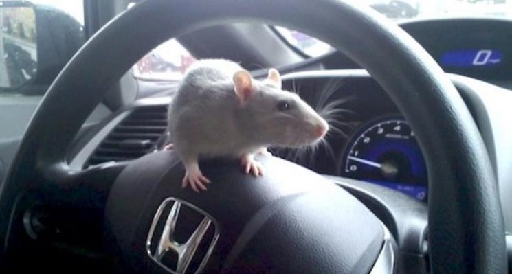 Cách chống chuột vào xe ô tô