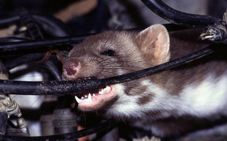 Khi chuột cắn dây điện sẽ gây ra những tia lửa điện