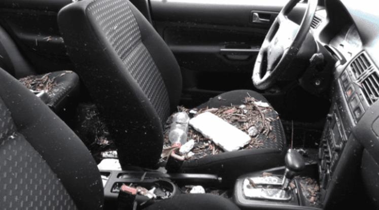 Khi chủ xe phát hiện thấy có rác bẩn trên xe với tần suất ngày một nhiều